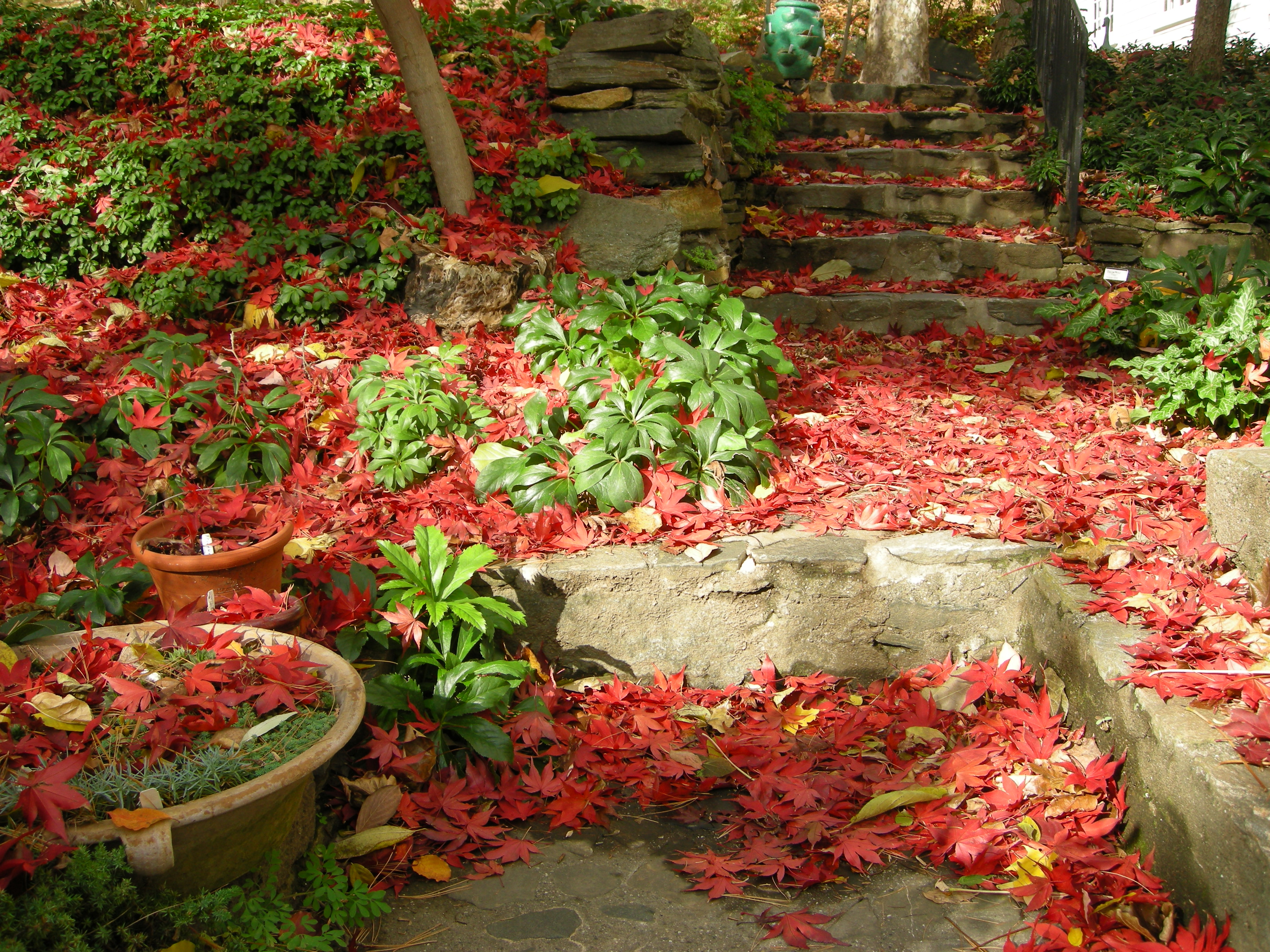 Shade gardening in fall leaves on the lawn carolyn 39 s shade gardens - Gardening in fall ...