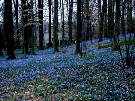 Chionodoxa on the March Bank photo Winterthur