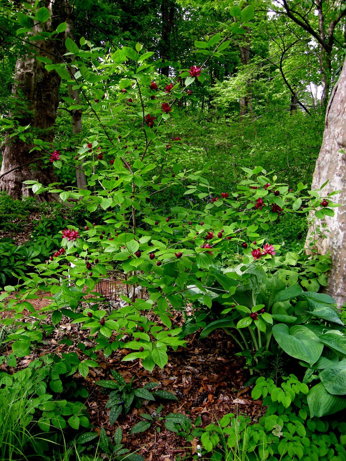 Partial shade garden ideas photograph to my woodland g for Part shade garden designs