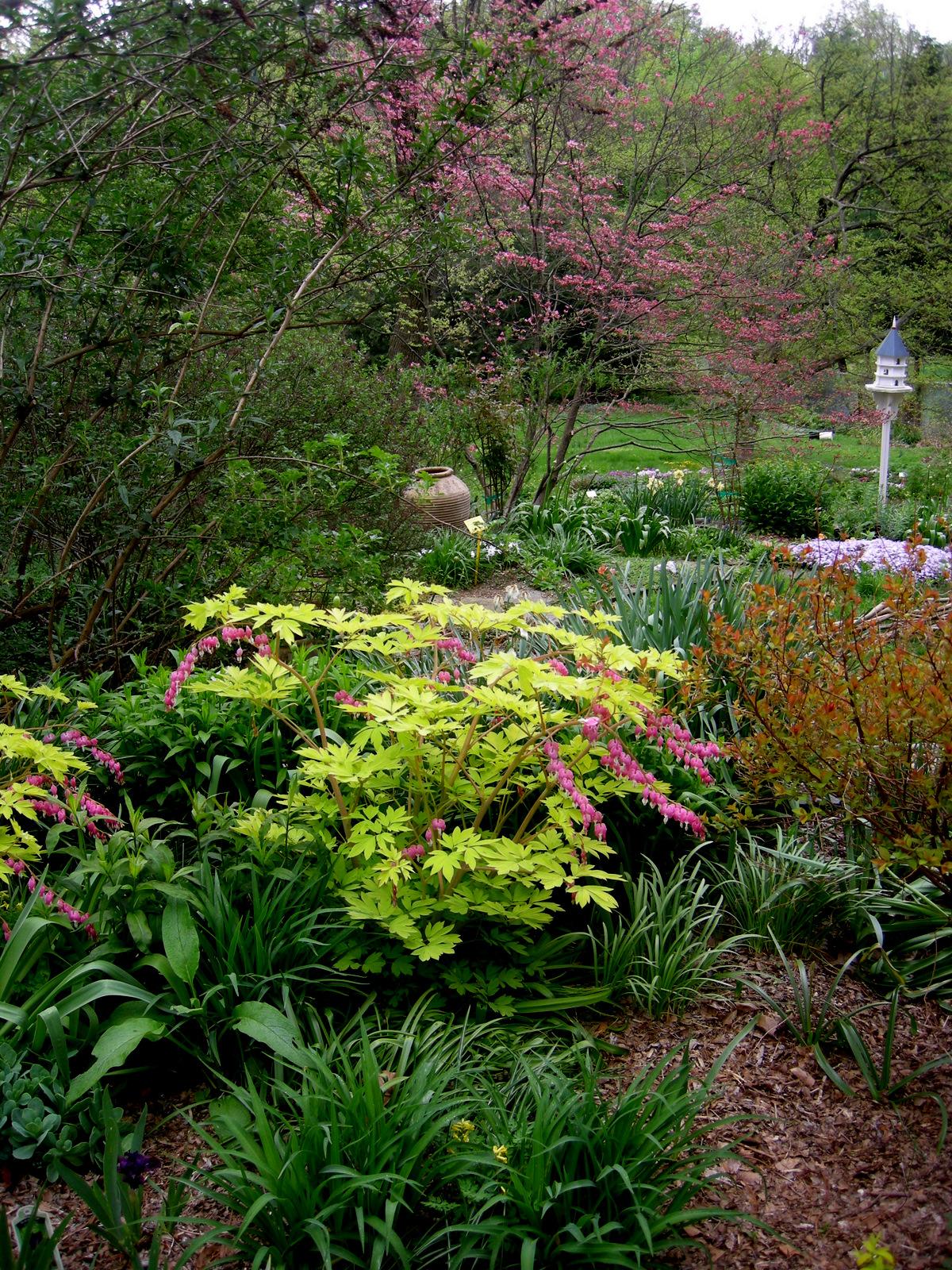 Free shade garden ideas photograph letting go part 1 the for Part shade garden designs