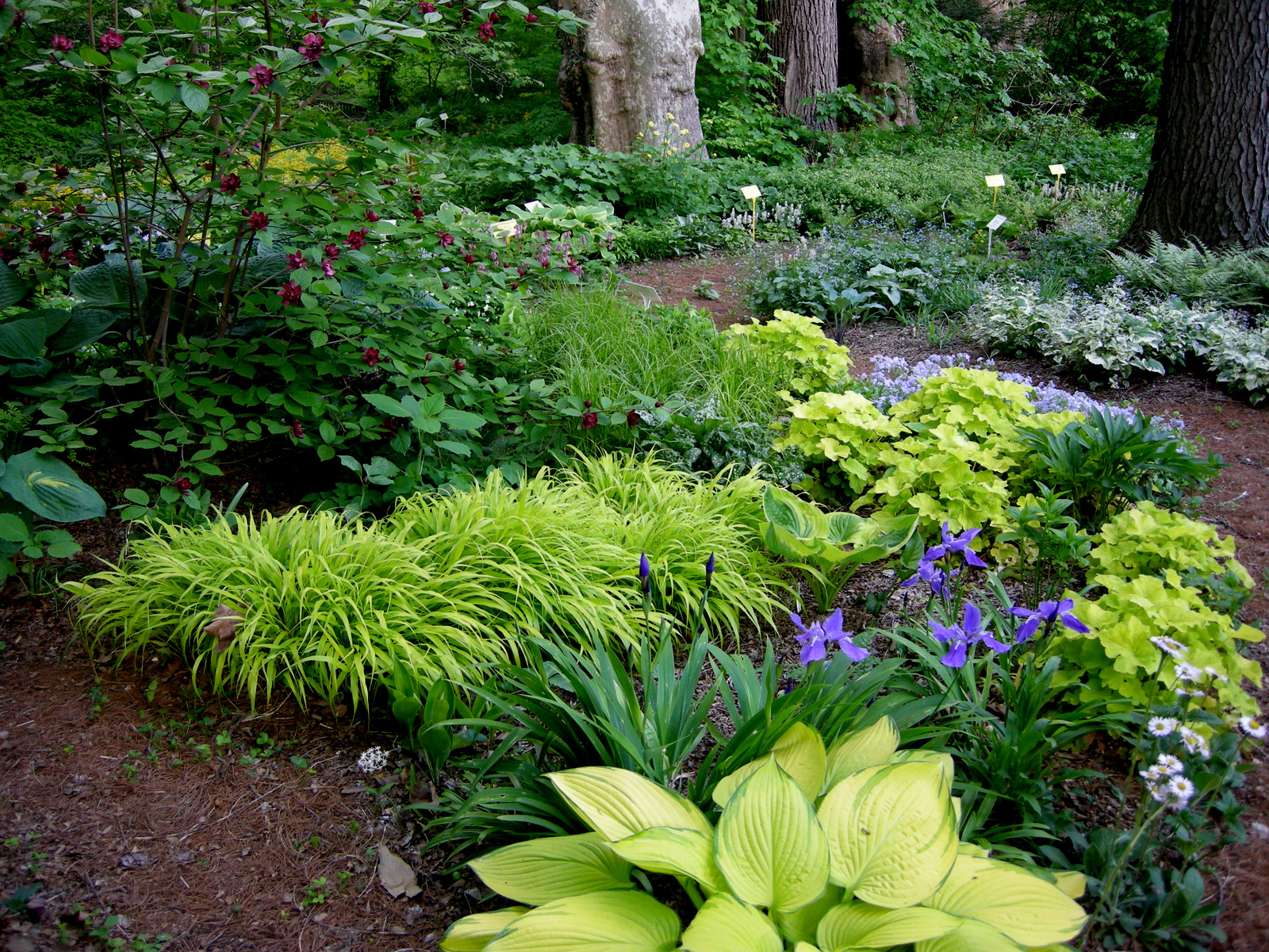 May gbbd an embarrassment of riches carolyn 39 s shade gardens for Forest garden design zone 4
