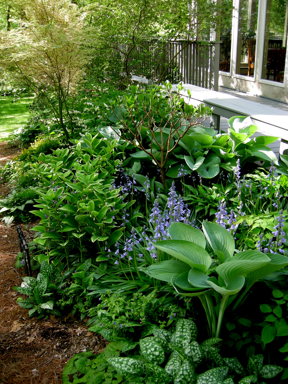 What Plants Will Grow Under A Deck : Across the pine needle path to garden surrounding deck