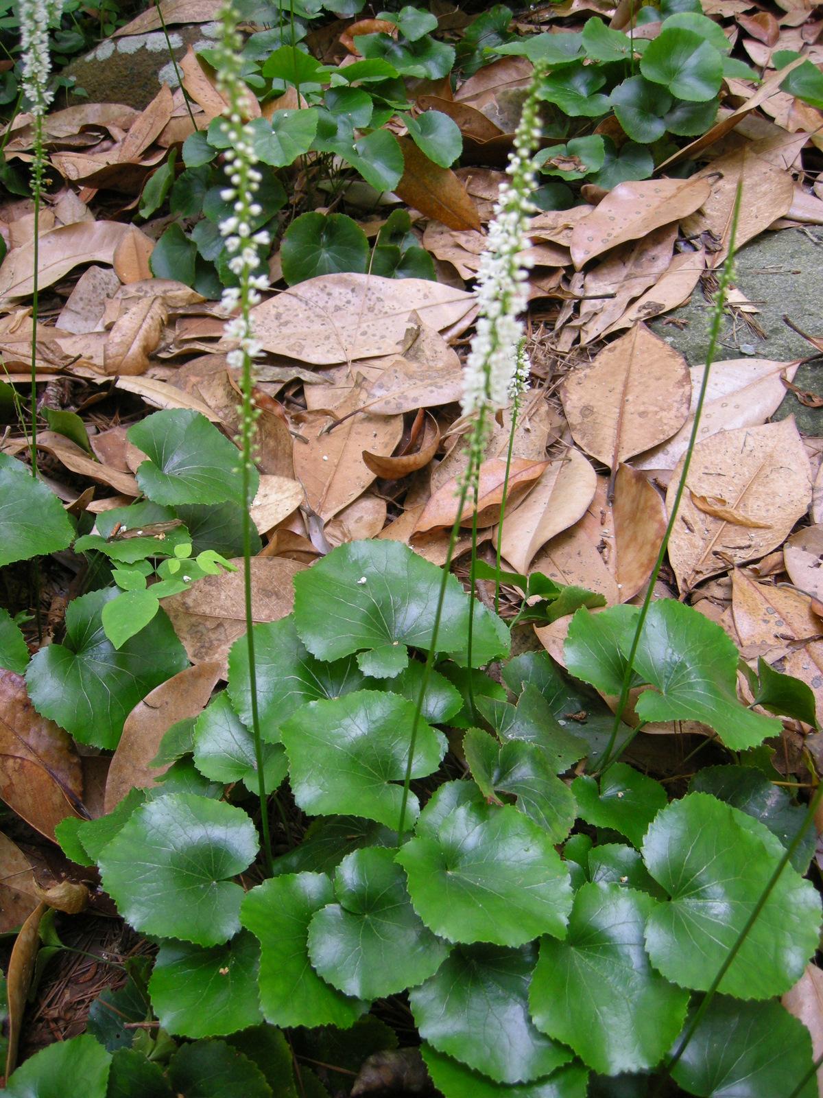 The wildlife garden in the h l blomquist garden of native plants - I