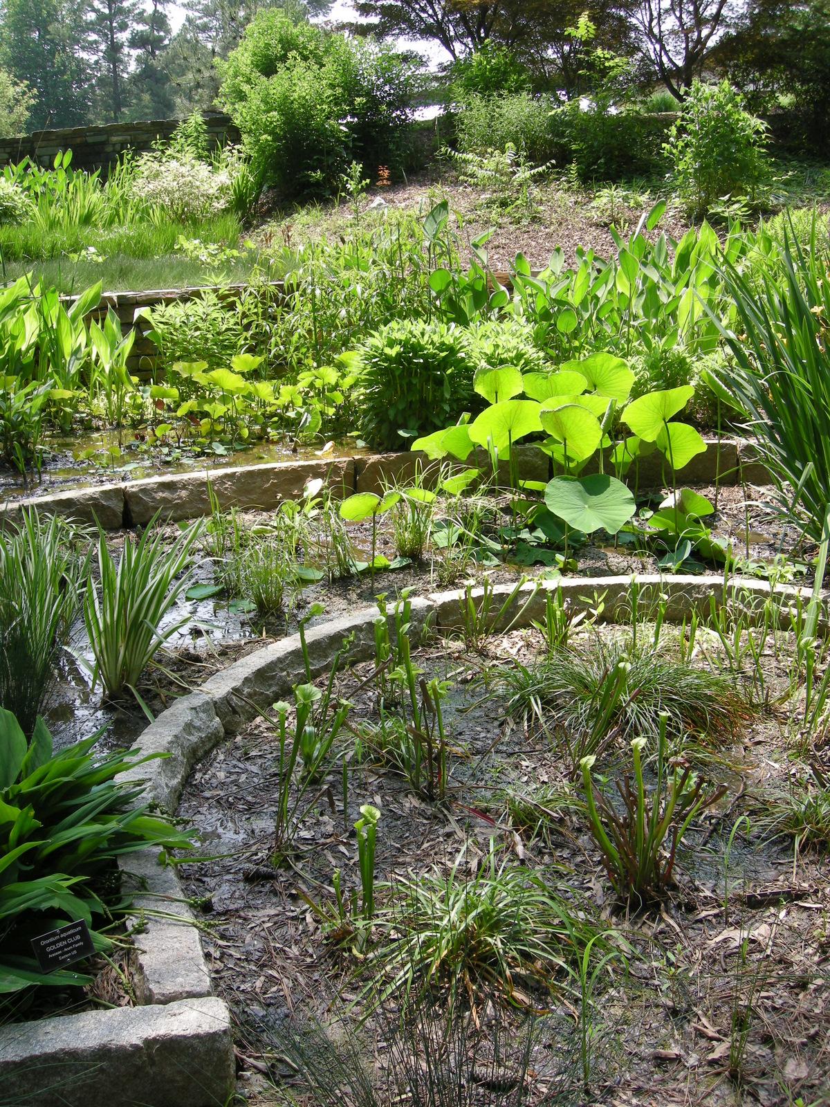 The wildlife garden in the h l blomquist garden of native plants - Next