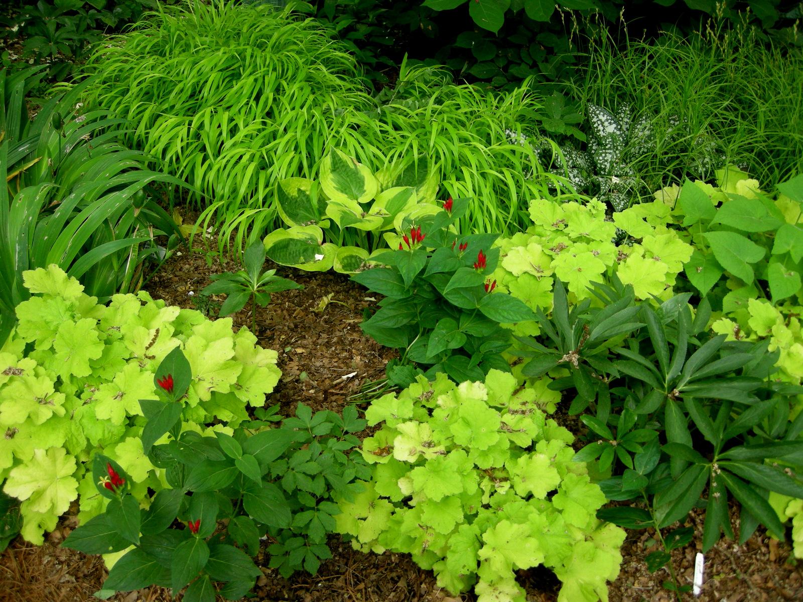 radnor conservancy event carolyn 39 s shade gardens