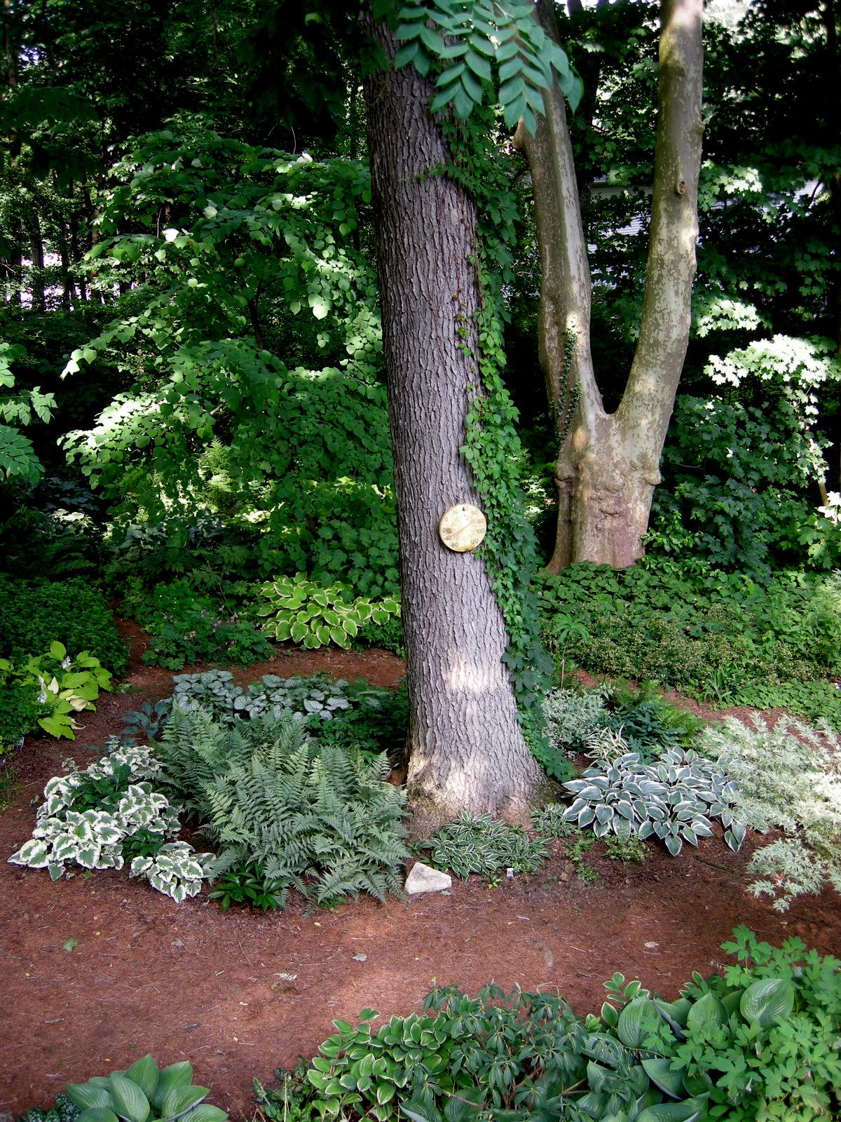 Chasmanthium Latifolium River Mist Carolyn S Shade Gardens