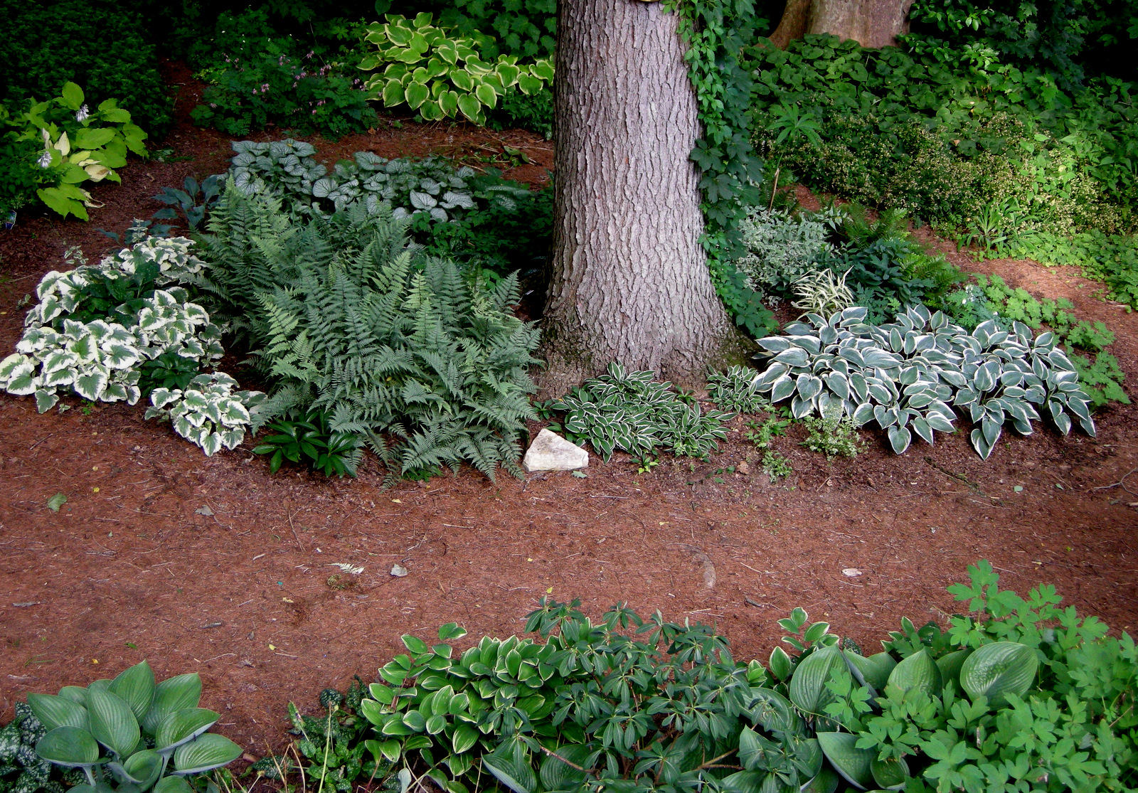 Planting Under Pine Trees : Theme gardens part silver and blue carolyn s shade