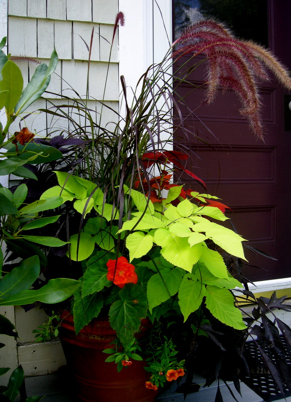 Containers for shade carolyn 39 s shade gardens - Container gardens for shade ...