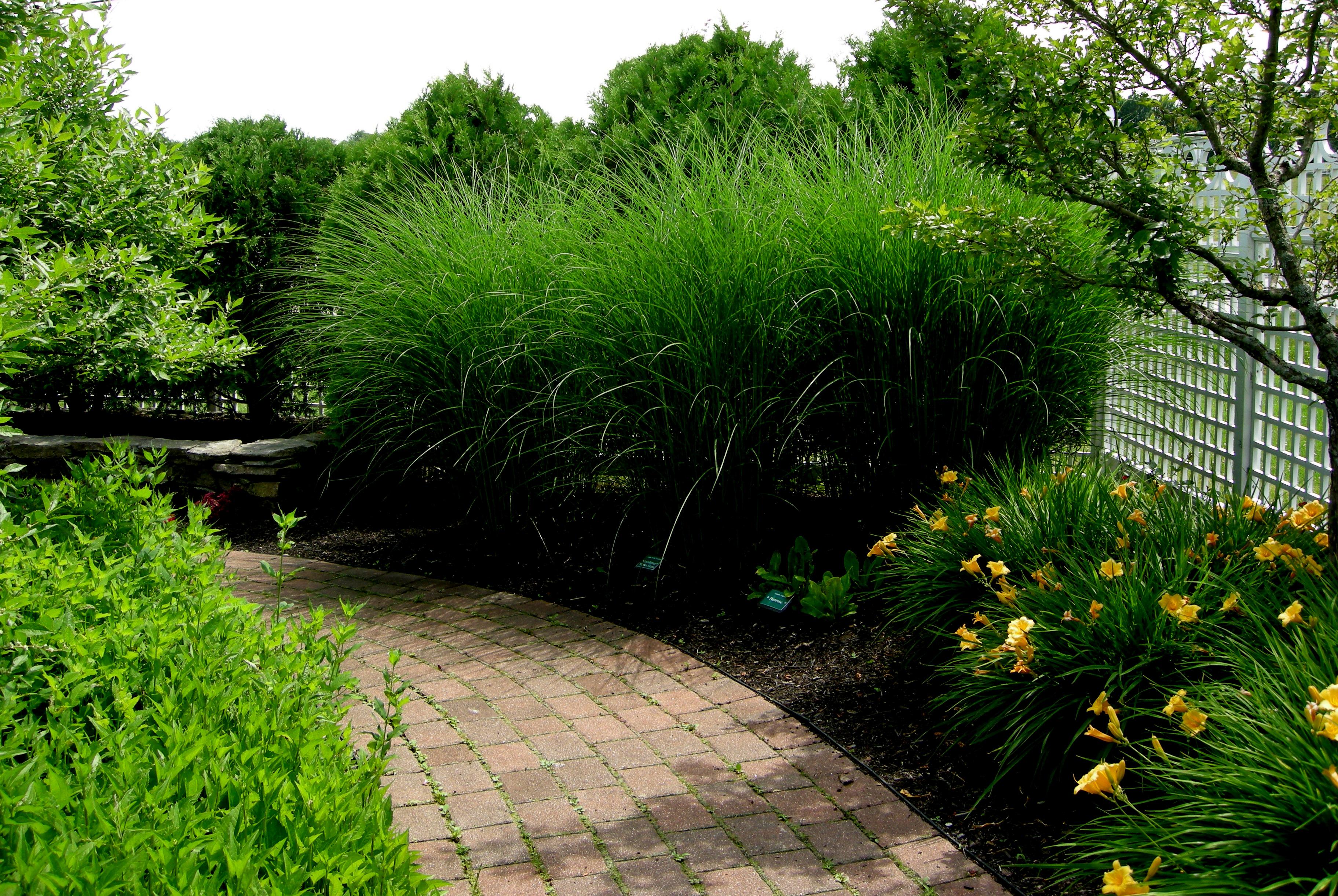 Pineland Farms Carolyn S Shade Gardens