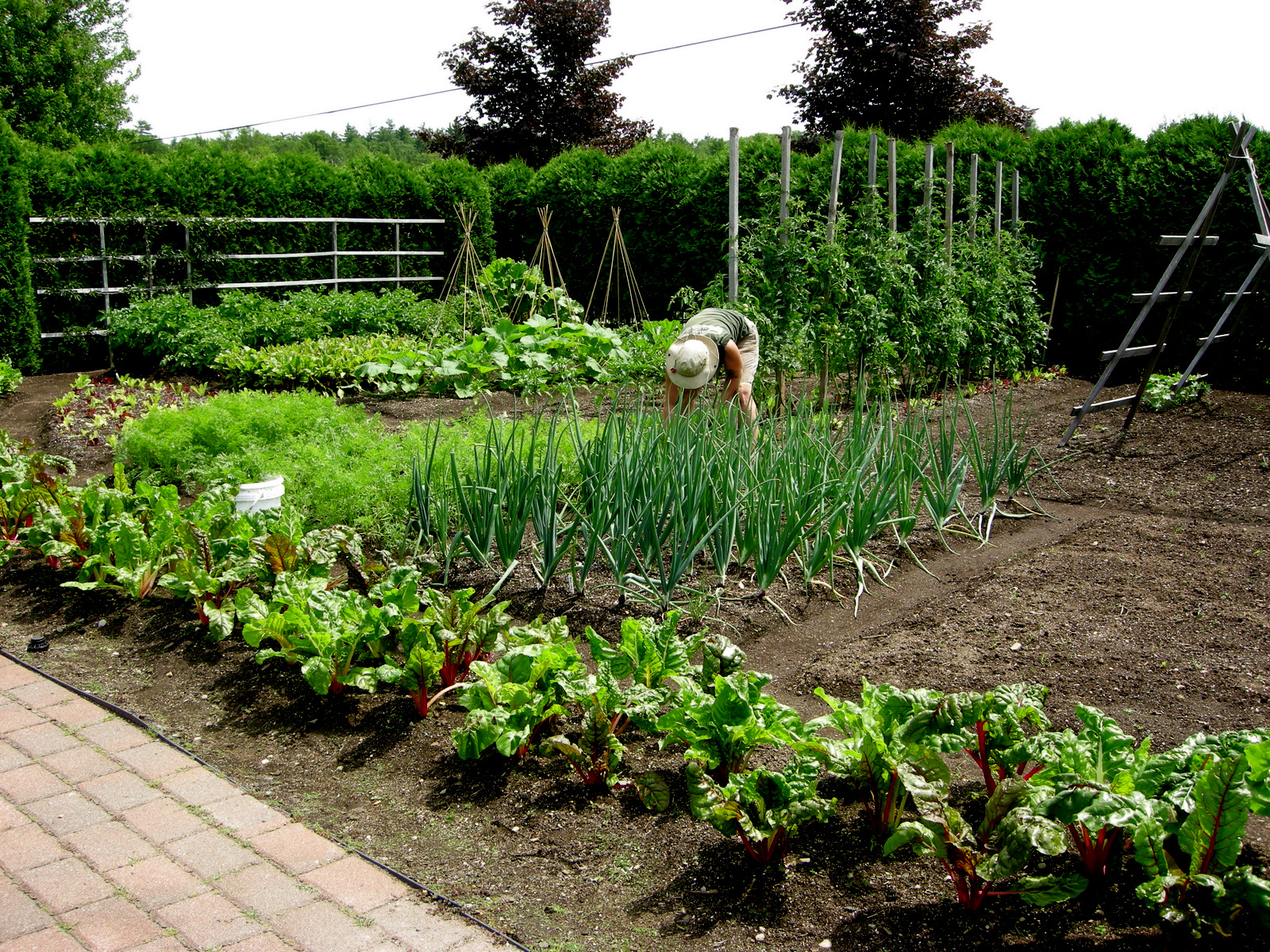 Garden at pineland farms carolyn 39 s shade gardens for Vegetable garden