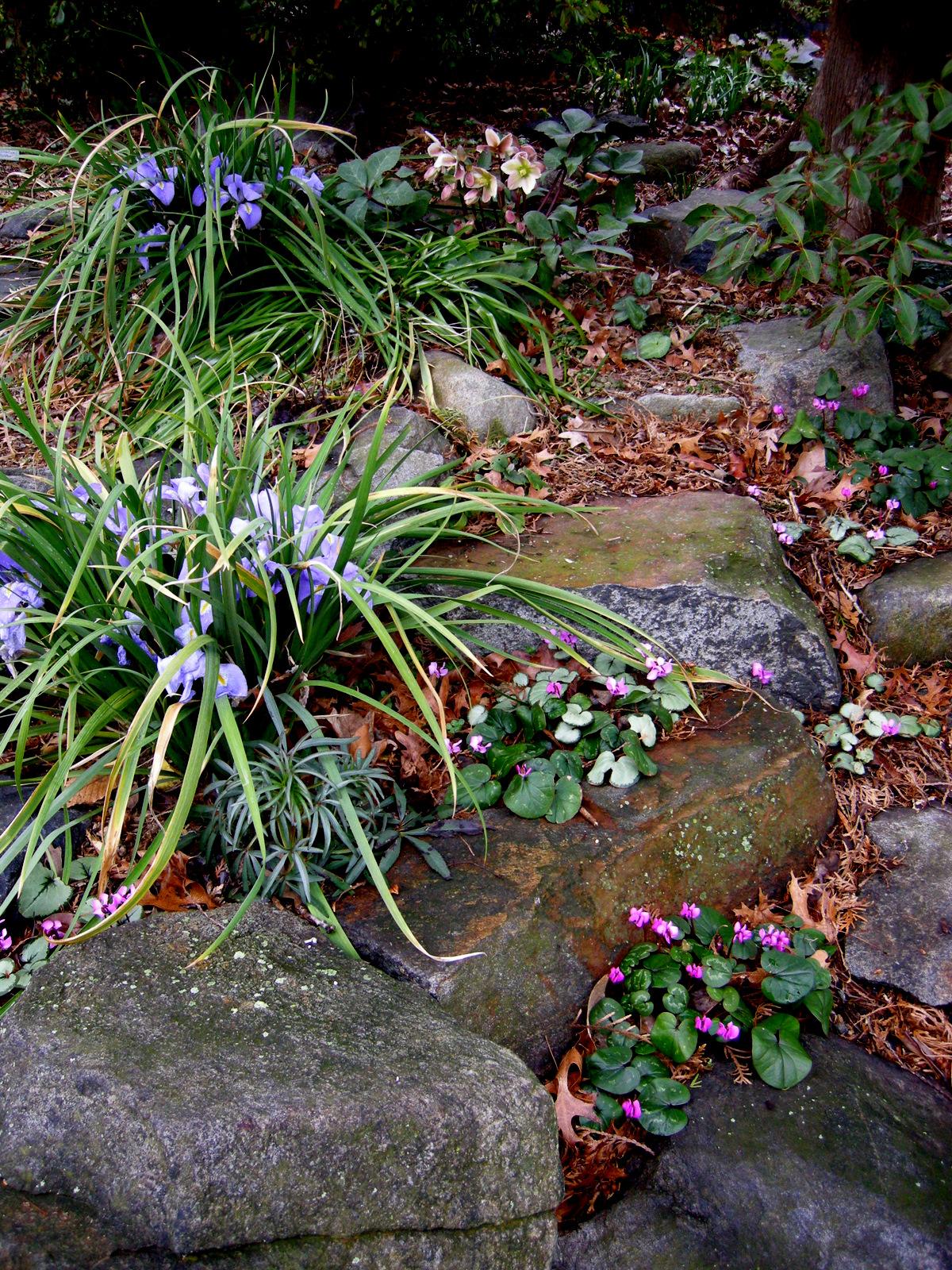 2012 Winter Interest Plants Carolyn 39 S Shade Gardens