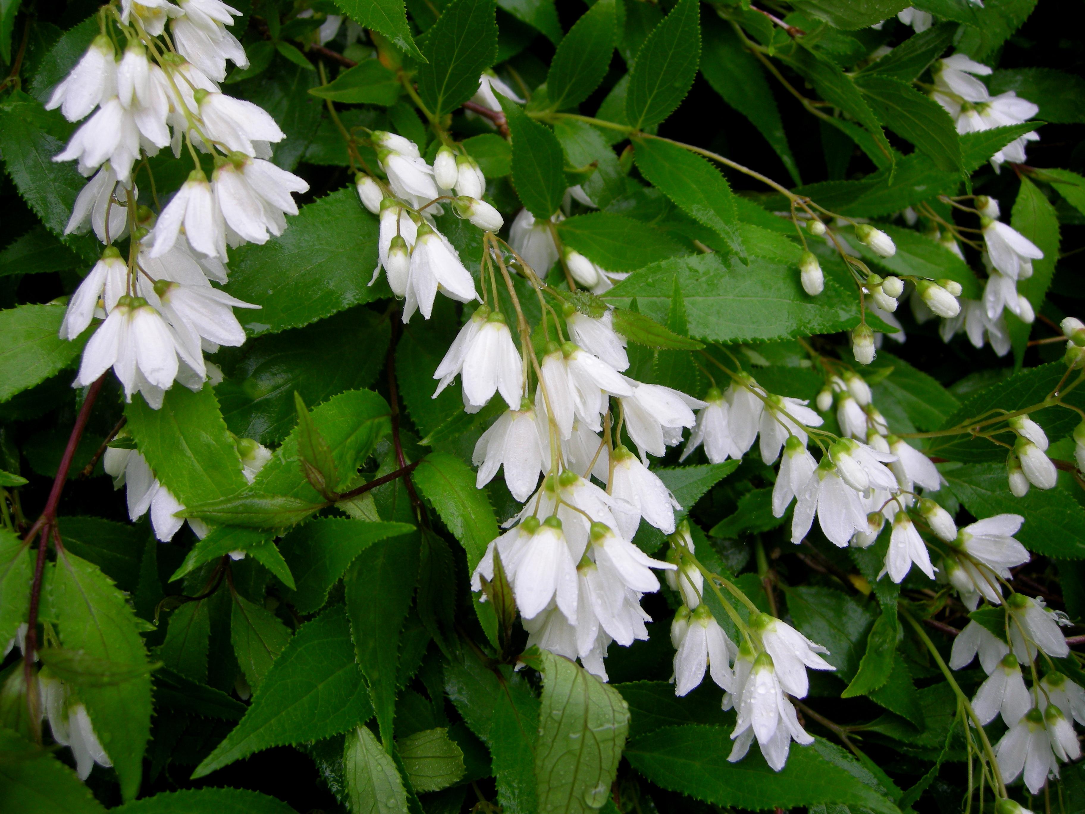 Flowers that bloom in the winter in missouri -  Nikko