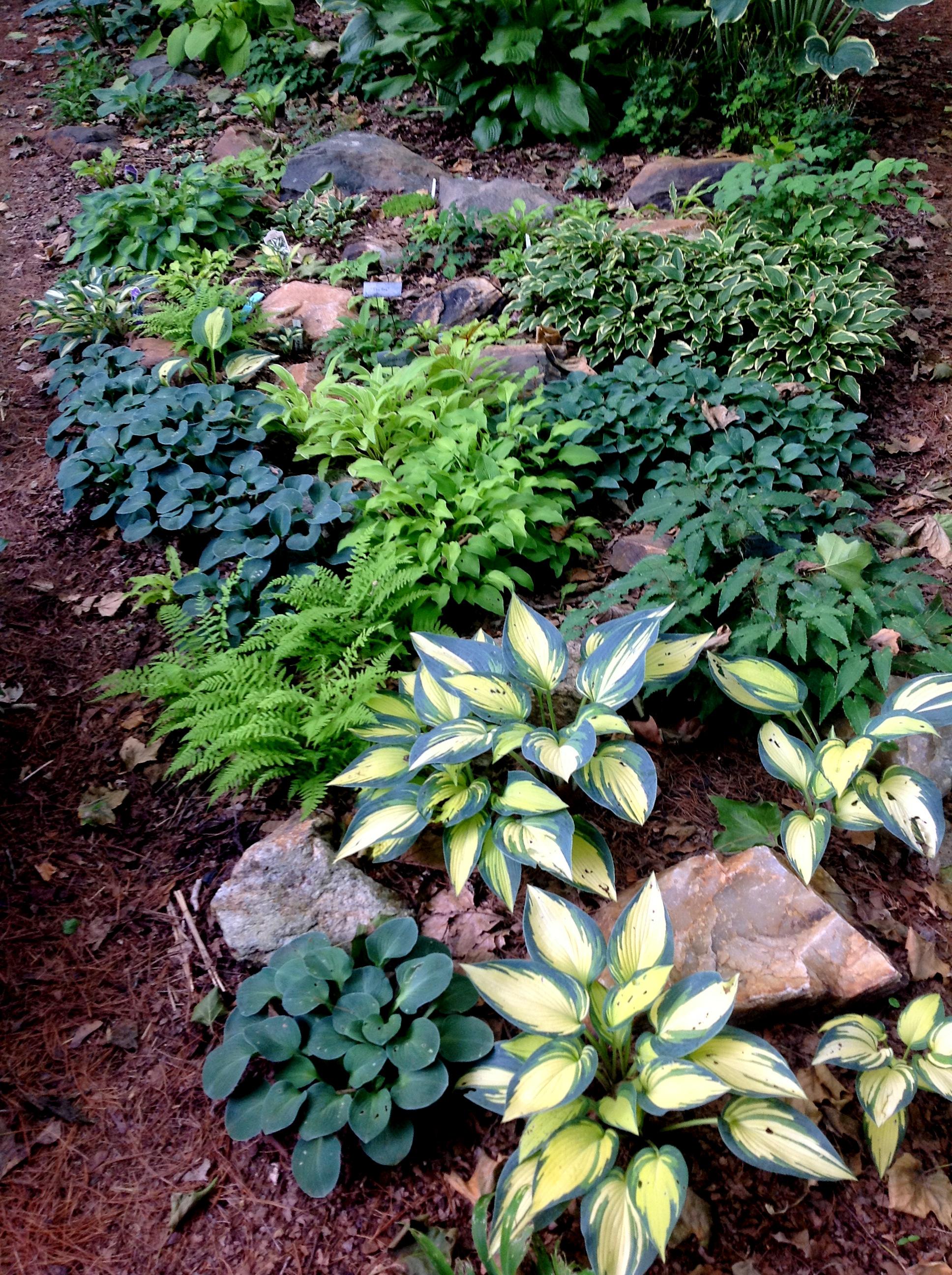 Shade gardening carolyn 39 s shade gardens for Rock garden designs shade