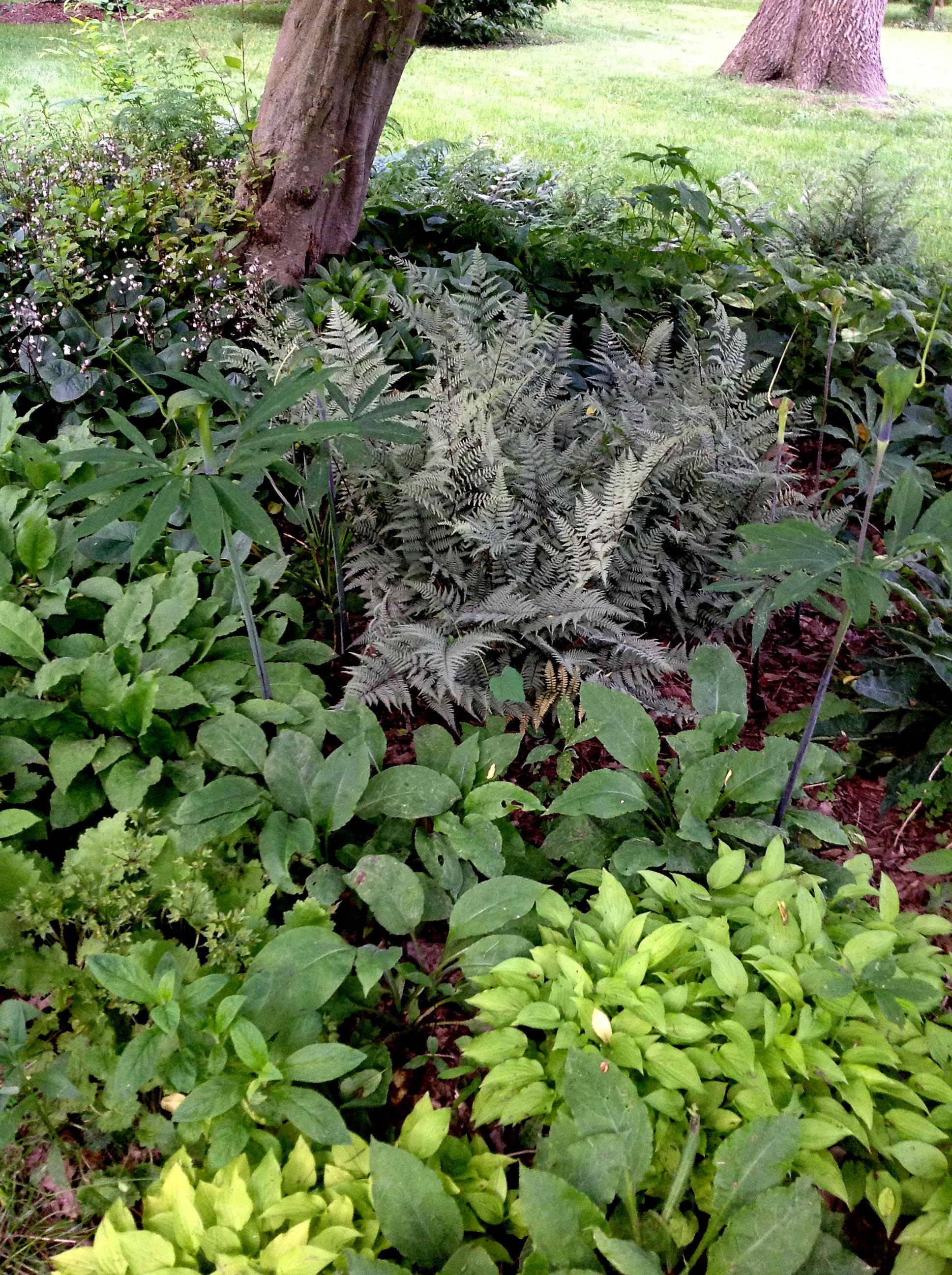 Garden Ideas Small Landscape Gardens Pictures Gallery: CAROLYN'S SHADE GARDENS