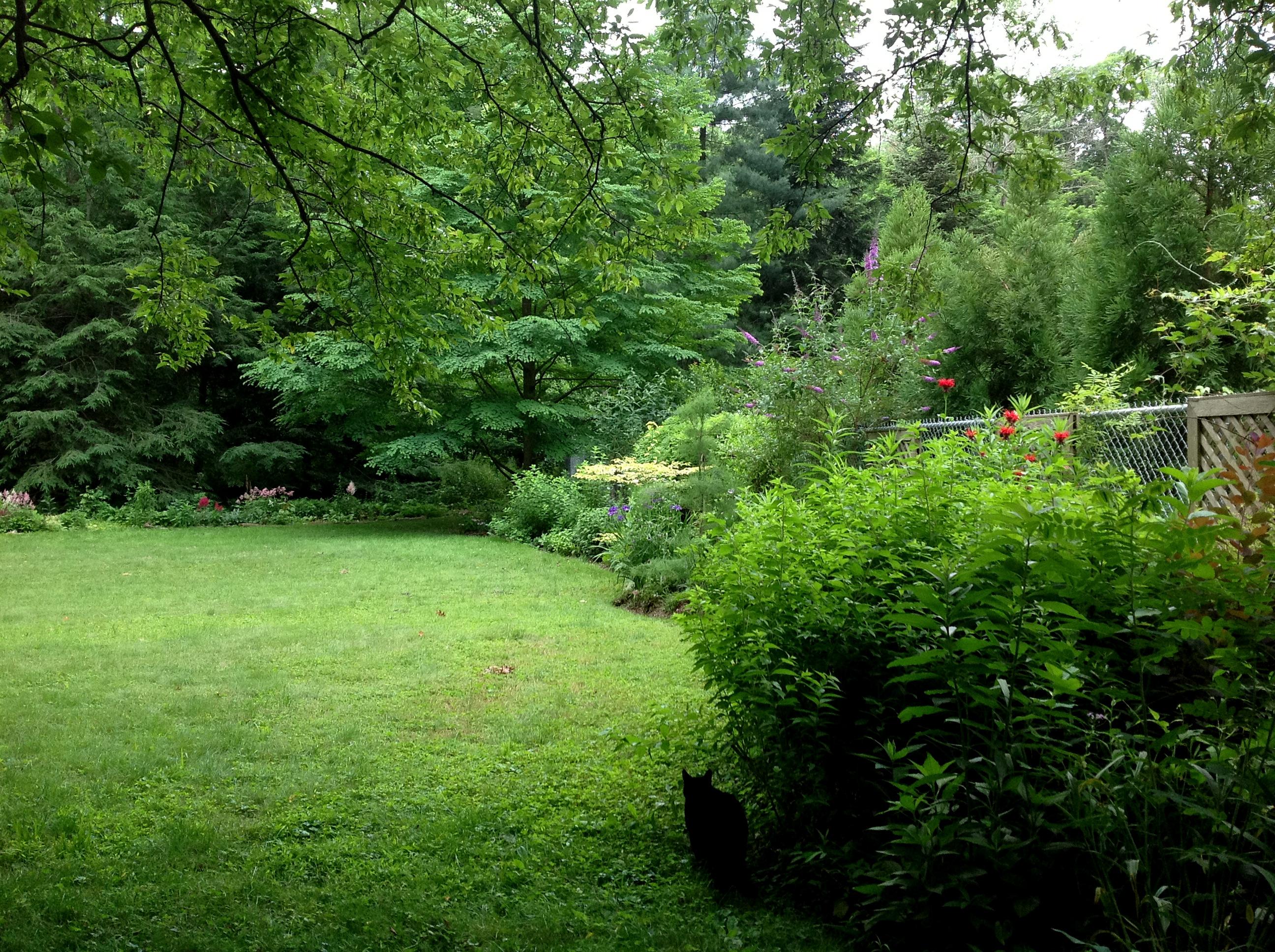 shade gardening CAROLYNS SHADE GARDENS