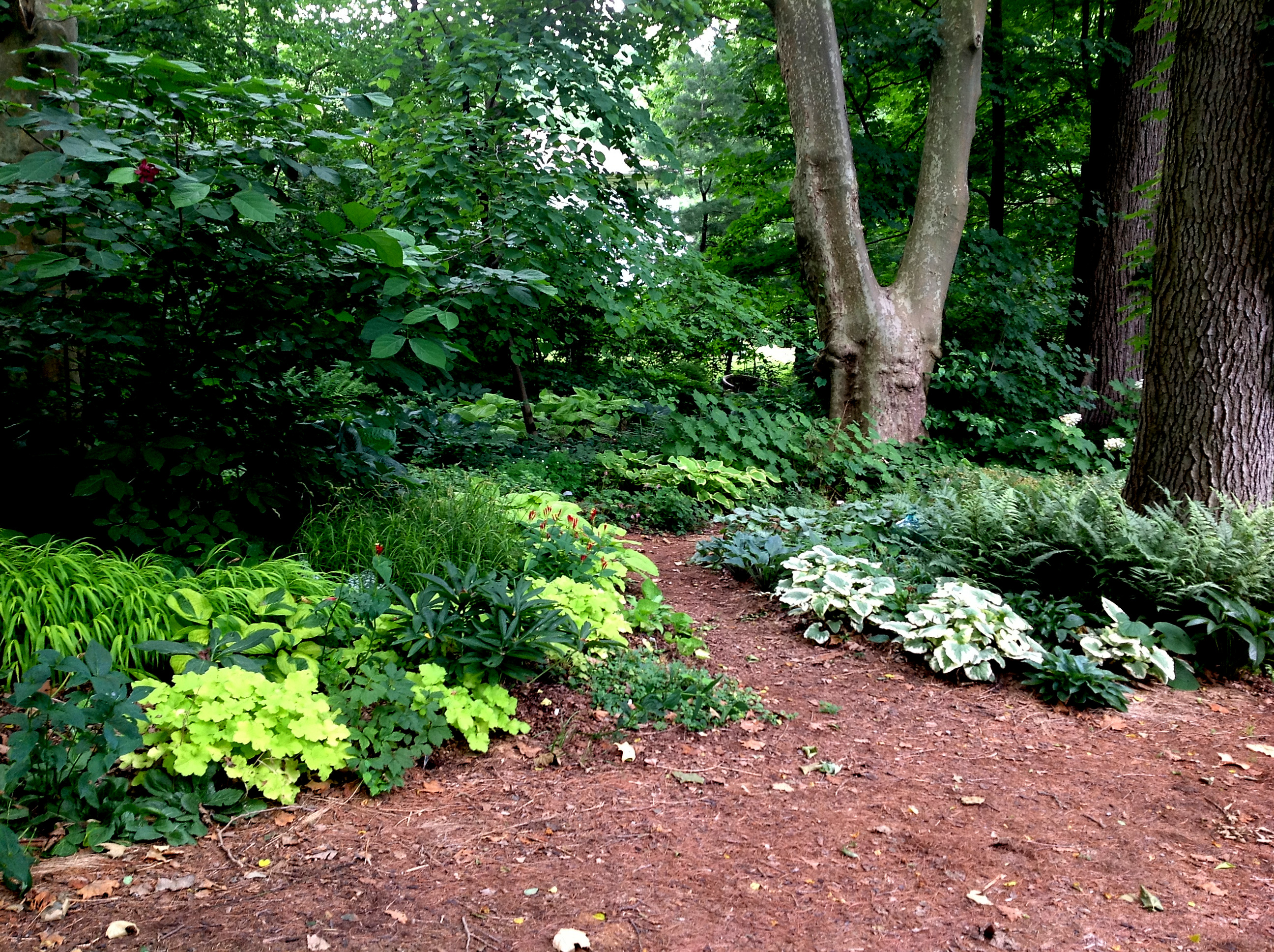 You asked for the long view part 2 carolyn 39 s shade gardens for Partial shade garden designs