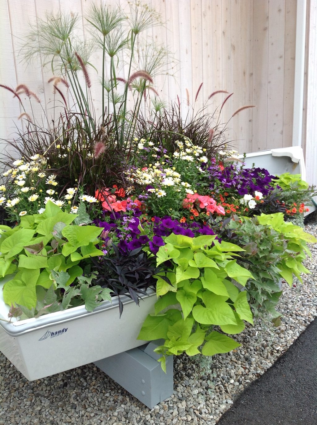 Row Your Way To Color With Annuals Carolyns Shade Gardens