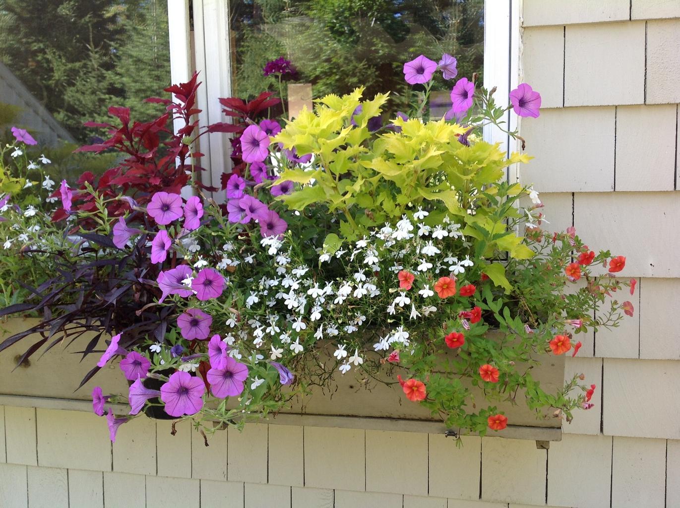 August 2012 Carolyn S Shade Gardens