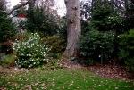 Camellias in Cressongarden