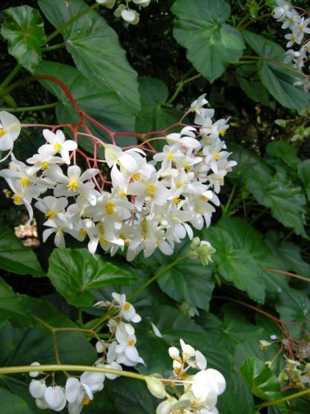 St Lucia botanical gardens