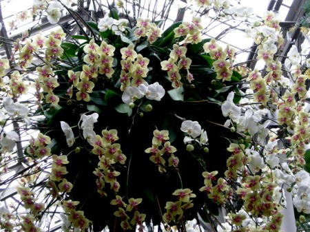 Longwood orchid orb