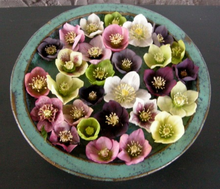 hellebores at Davoid Culp's
