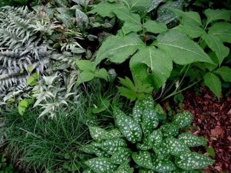 hornbeam garden