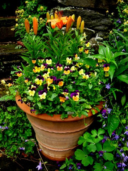container in orange and purple garden