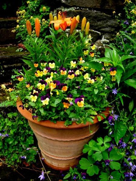 container in orange and purple garden
