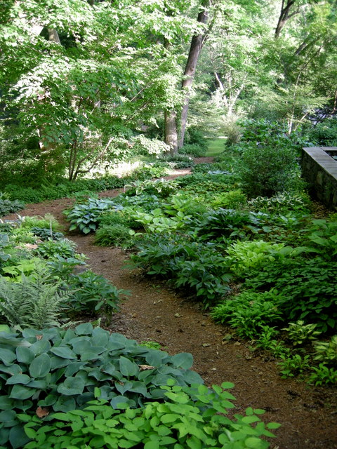 Brunnera Dawson S White Carolyn S Shade Gardens