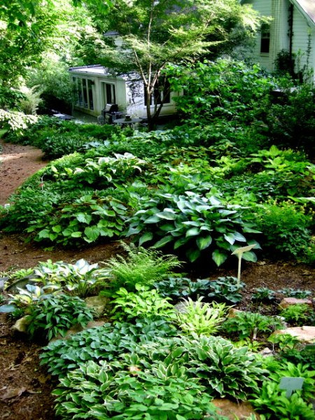 miniature hosta rock garden