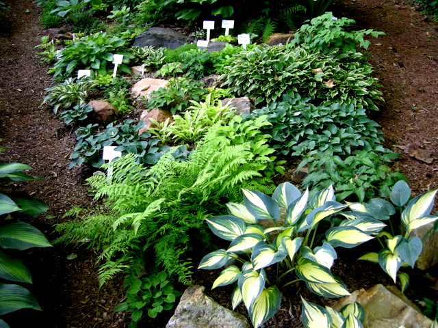 Pleasurable Pairings For Early Summer Part 2 Carolyn 39 S Shade Gardens