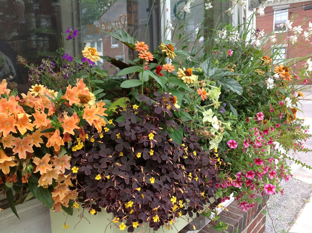 Annuals for containers carolyn 39 s shade gardens - Best flower combinations for containers ...