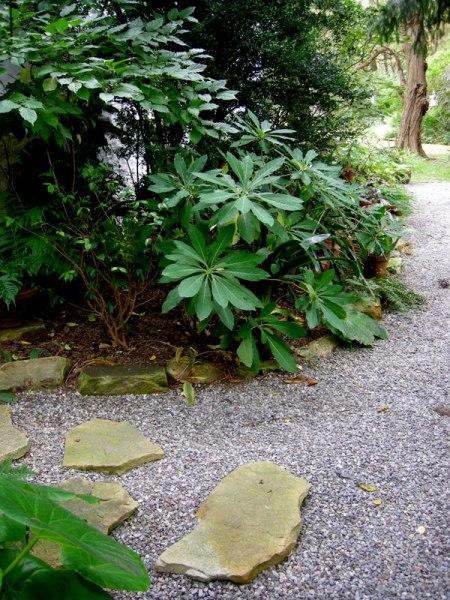 Edgeeworthia chrysantha