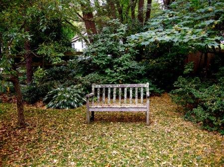 David Culp's Garden Fall 2013-006