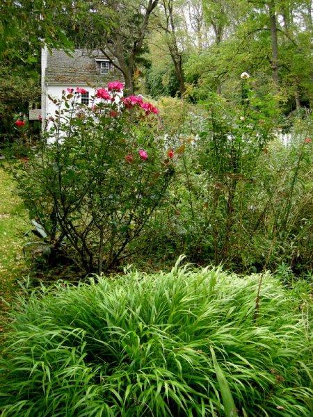 David Culp's Garden Fall 2013-007