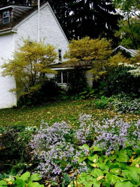 David Culp's Garden Fall 2013-013