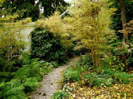 David Culp's Garden Fall 2013-015