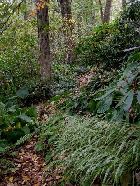 The Layered Garden Carolyn S Shade Gardens