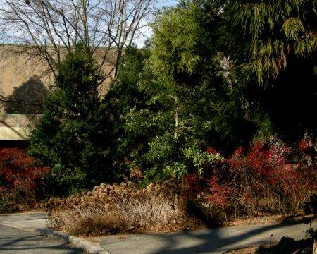 Scott Arboretum at Swarthmore College 12-1-2013 2-38-10 PM