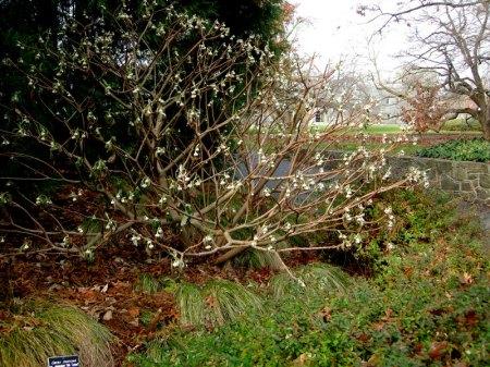Scott Arboretum at Swarthmore College 12-1-2013 2-51-27 PM