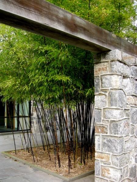 Scott Arboretum at Swarthmore College 12-1-2013 2-58-20 PM