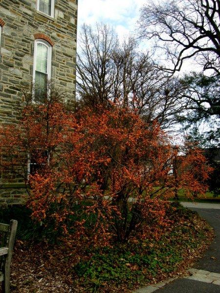 The Scott Arboretum Of Swarthmore College Carolyn 39 S