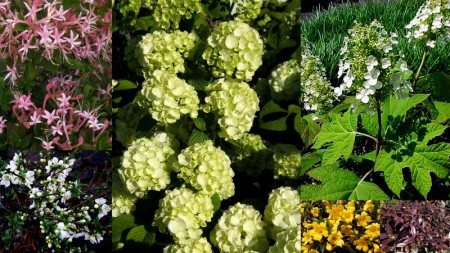 Spring Shrub Offer