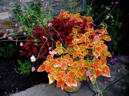 Bunting Garden Sept 2014 9-6-2014 1-42-44 PM