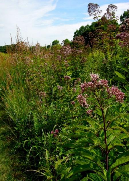 Longwood Gardens Meadow 2014 9-3-2014 11-29-50 AM