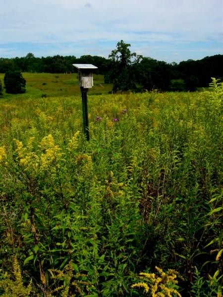 Longwood Gardens Meadow 2014 9-3-2014 11-44-54 AM