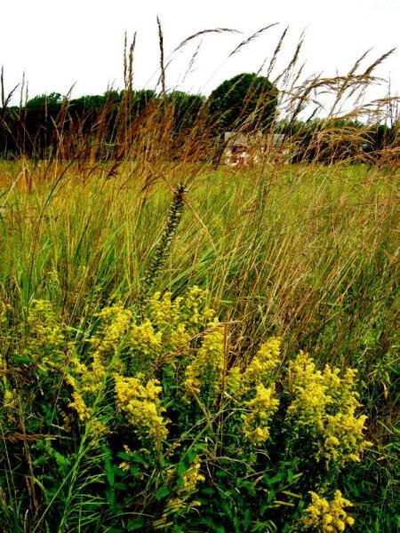 Longwood Gardens Meadow 2014 9-3-2014 11-51-56 AM
