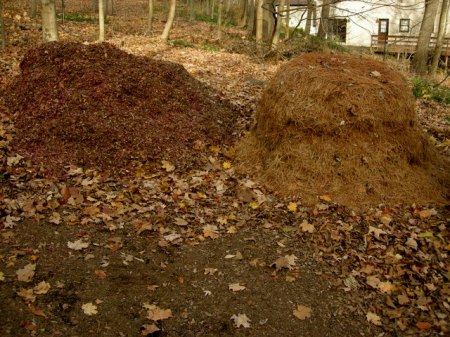 Leaf mulch and pine needles CSG