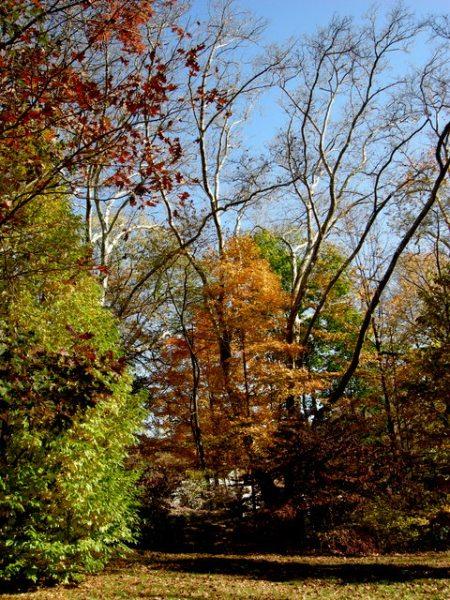 Fall 2014 at CSG
